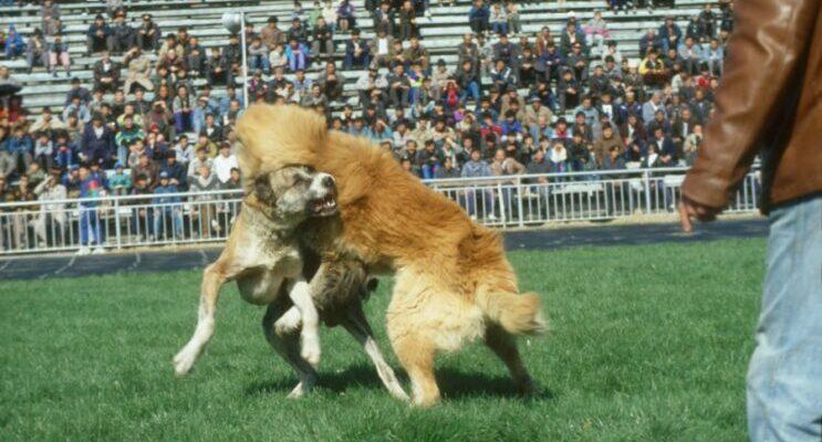 Приобретение собаки в Москве