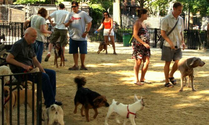 Места выгула собак в Москве