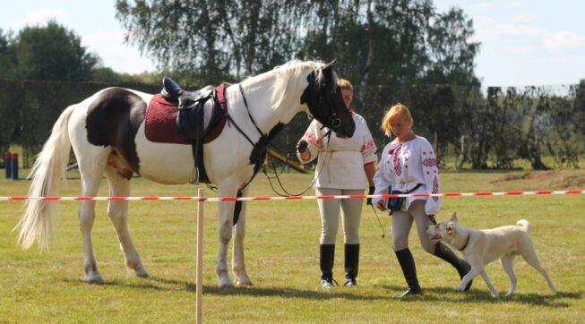 Девушки стоят рядом с лошадью и собакой