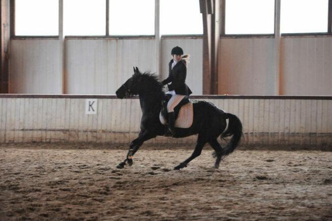 Девушка катается на лошади внутри манежа
