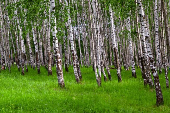 Парк «Битцевский лес» юго-запад Москвы